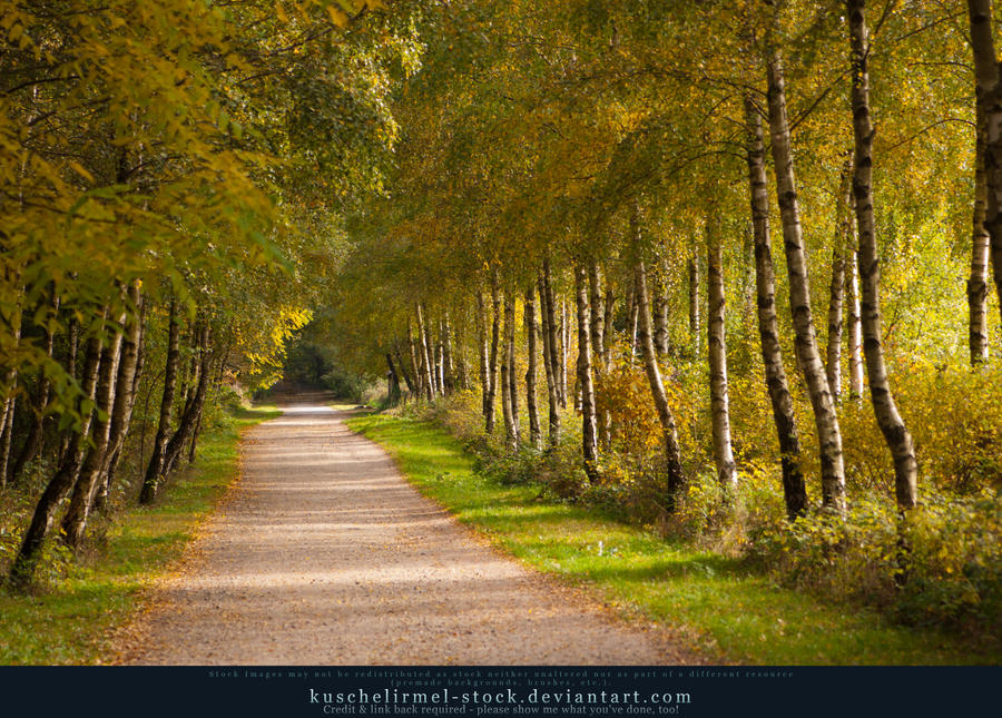 Grimm's Forest in October 01 by kuschelirmel-stock