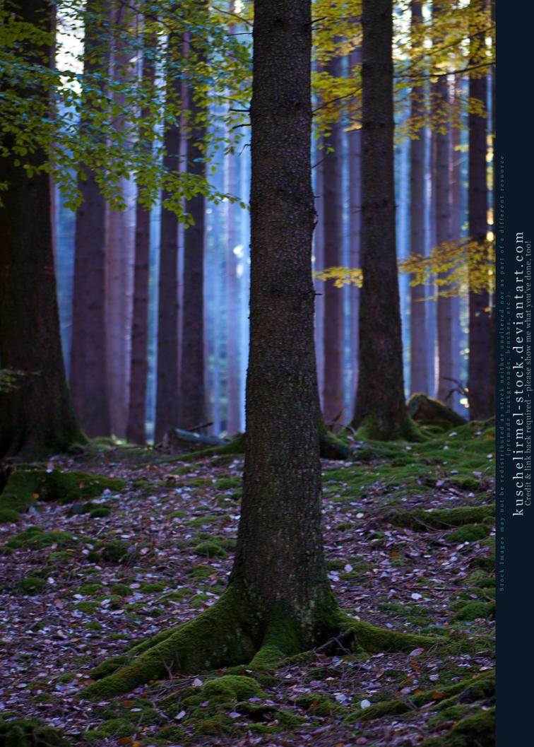 Grimm's Forest in October 06 by kuschelirmel-stock