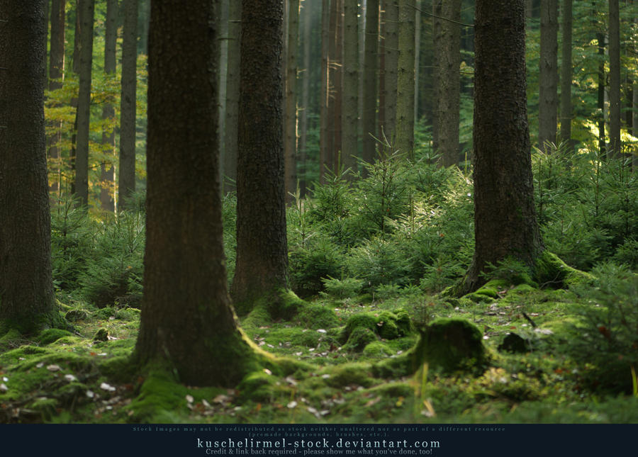 Grimm's Forest in October 08 by kuschelirmel-stock