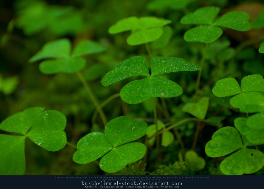 Clovers 03 by kuschelirmel-stock