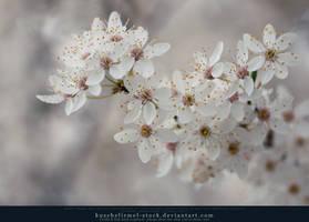 Spring has Sprung 01 by kuschelirmel-stock