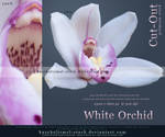 White Orchid Cut Out