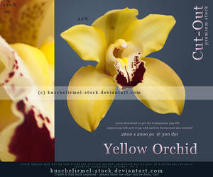 Yellow Orchid Cut Out by kuschelirmel-stock