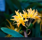 Orchids 03