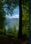 Alpine Lake - Tree - Mountains 02