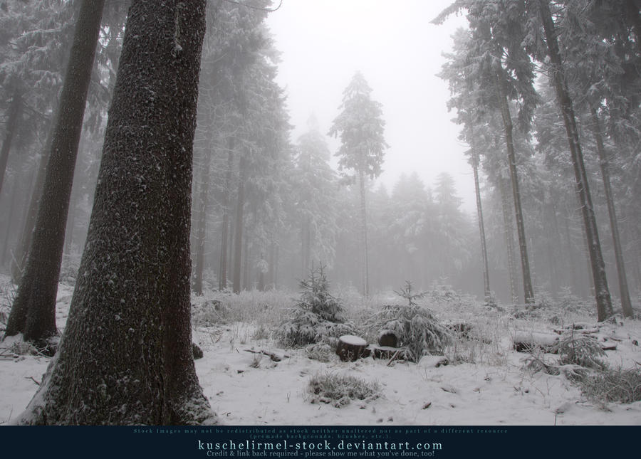 Winter Forest with Fog 11 by kuschelirmel-stock