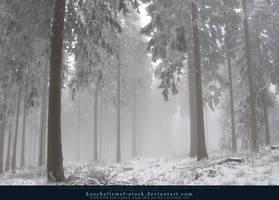 Winter Forest with Fog 10 by kuschelirmel-stock
