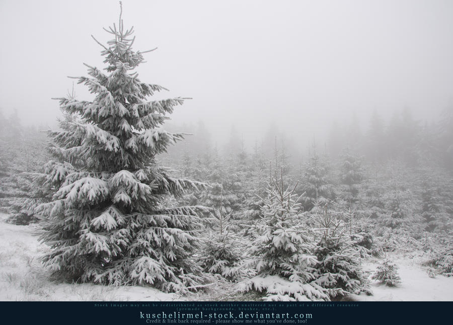 Winter Forest with Fog 09 by kuschelirmel-stock