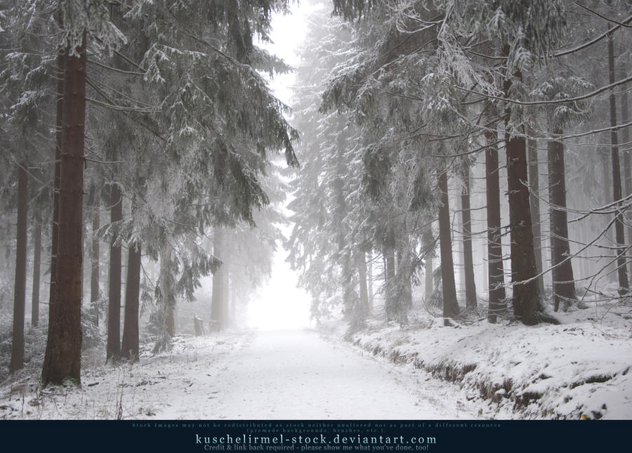 Winter Forest with Fog 07