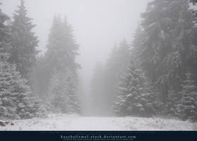 Winter Forest with Fog 05 by kuschelirmel-stock