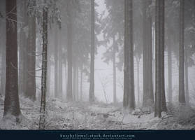 Winter Forest with Fog 04