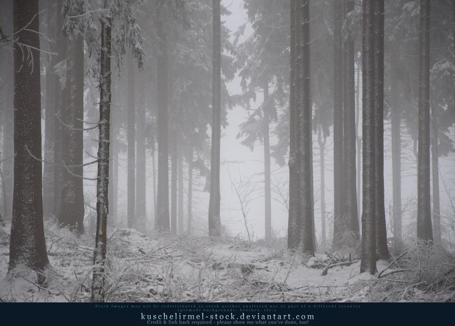 Winter Forest with Fog 04 by kuschelirmel-stock