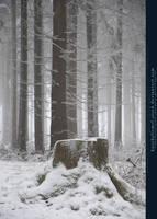 Winter Forest with Fog 03 by kuschelirmel-stock