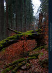 Green Moss and Red Leaves