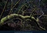 It's a Jungle by kuschelirmel-stock
