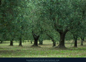 Olive Grove 03 by kuschelirmel-stock