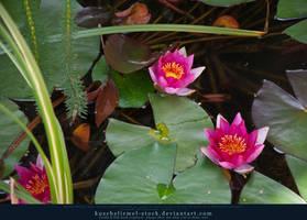 Fairy Pond 08