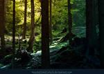 Magic Forest 03