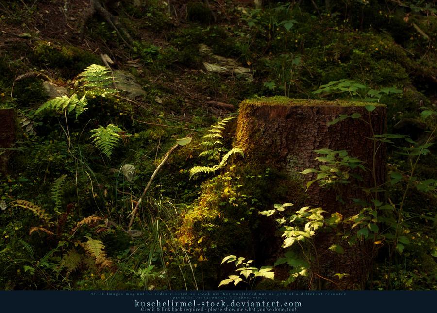 Magic Forest 05 by kuschelirmel-stock