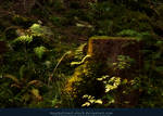 Magic Forest 05
