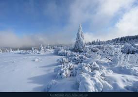 White Forest 03 by kuschelirmel-stock