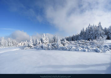 White Forest 05 by kuschelirmel-stock