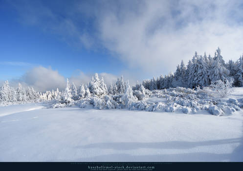 White Forest 05