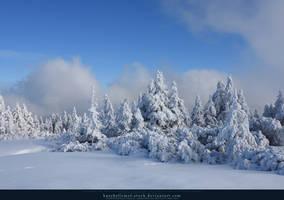 White Forest 07 by kuschelirmel-stock
