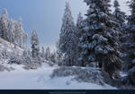 White Forest 09