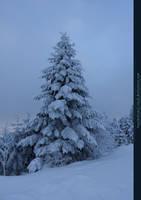 White Forest 10 by kuschelirmel-stock