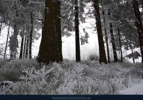 White Forest 11