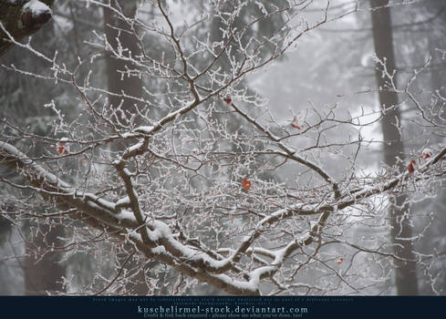 Snowy Branches I