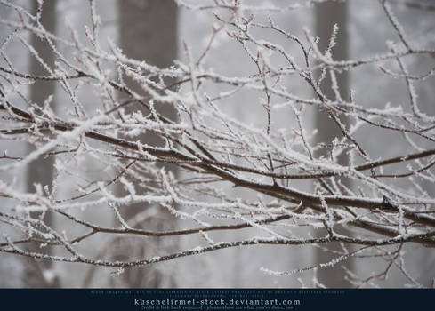 Snowy Branches II