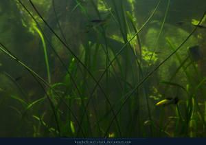 Underwater Plants Texture