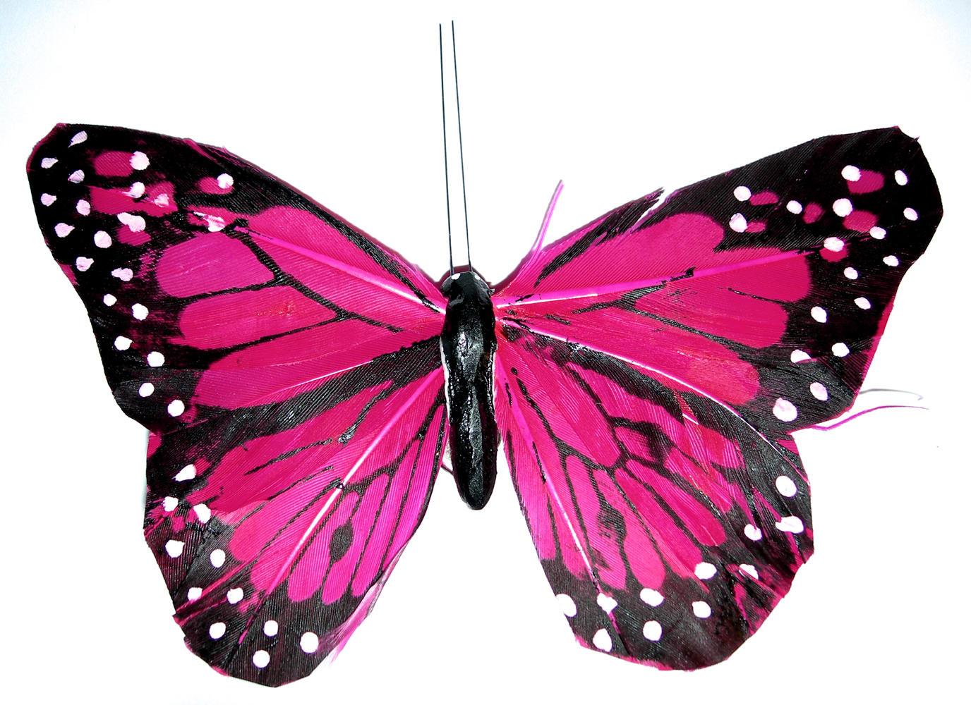 butterfly_pink by kuschelirmel-stock on DeviantArt