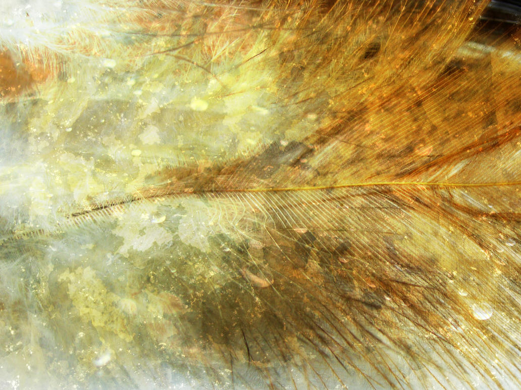 texture004 by kuschelirmel-stock