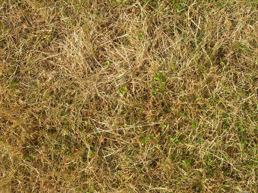 Image result for dead grass