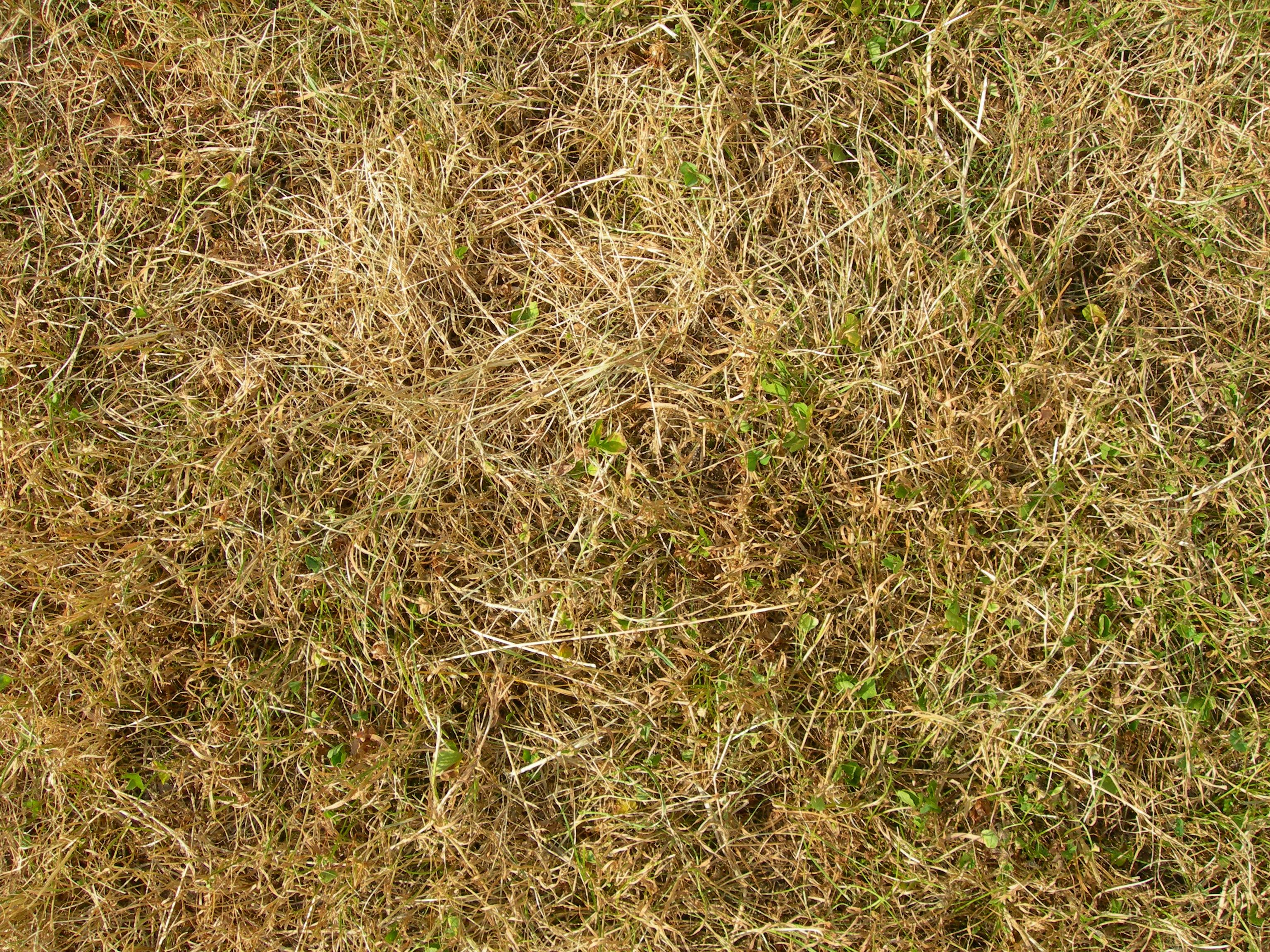 texture - dead grass