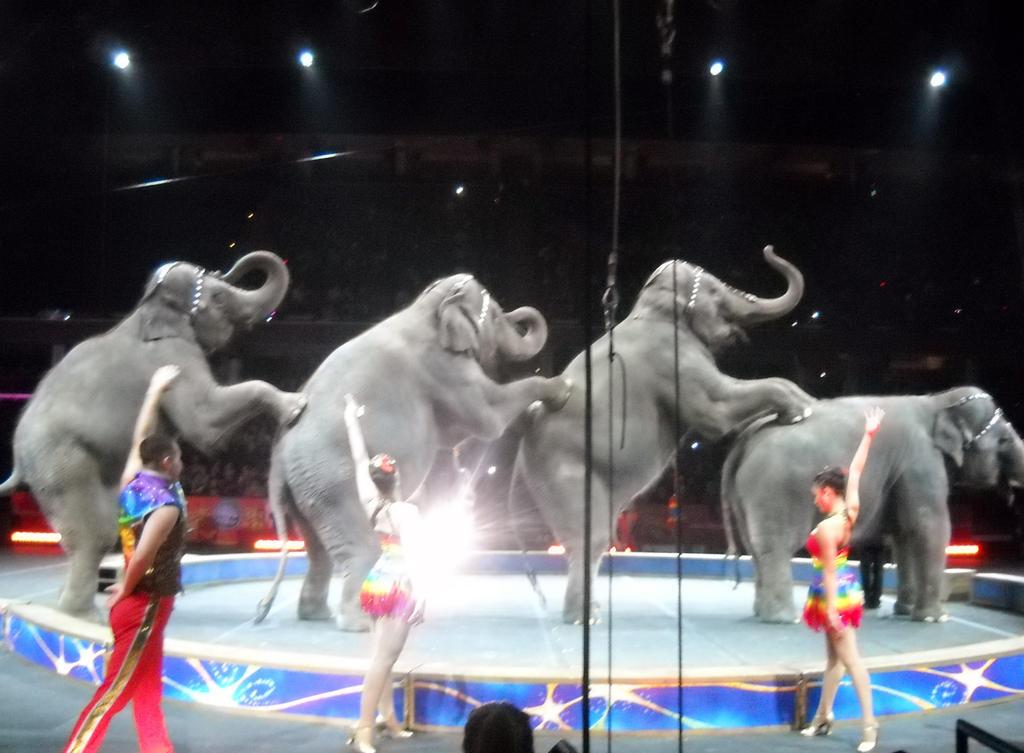 Circus Elephants by TheWizardofOzzy