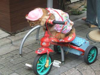 Harajuku Cat