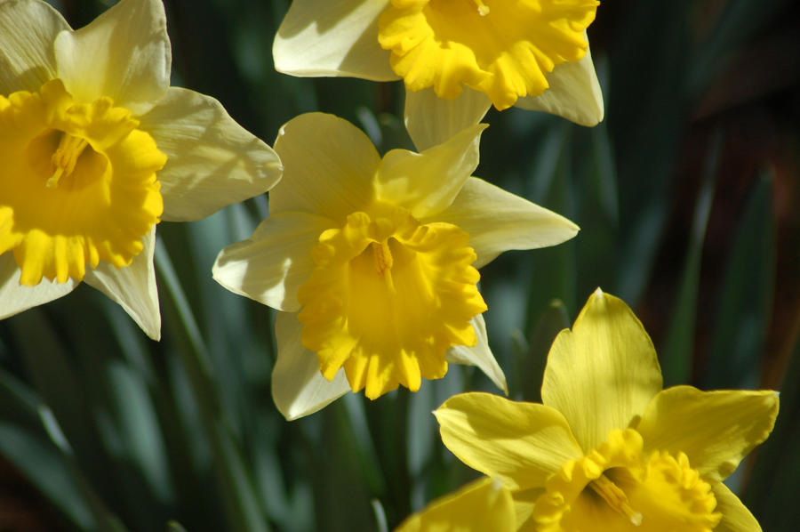 First spring flowers by radioactified on deviantart first spring flowers by radioactified mightylinksfo