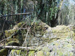 Forest ruin stock 3