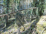 Forest ruin stock 4