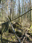 Forest ruin stock 5