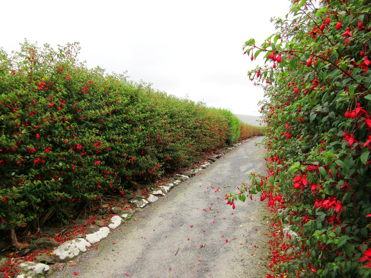The fuchsia pathway stock