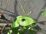 Leaf and ladybird stock