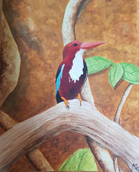 Indian kingfisher