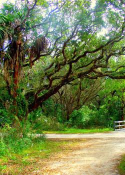 Path to Fort Matanzas