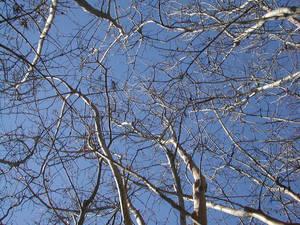 Tree filled Sky