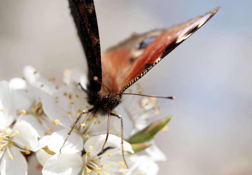 Nectar Feeder by Niverdia